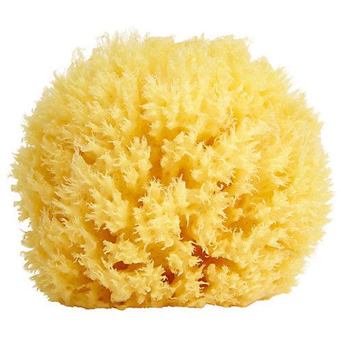 Hand-harvested Sea Sponge