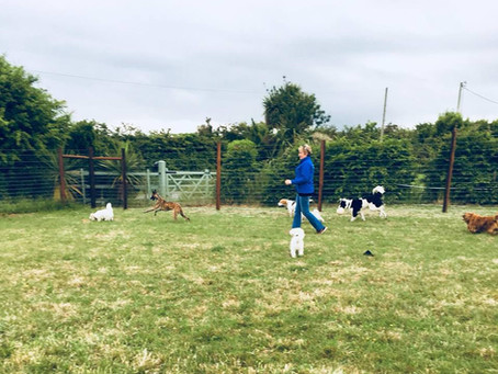 Why choose our dog daycare centre?