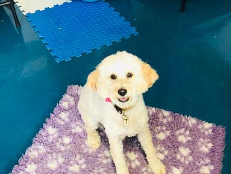 Doggy Daycare mischief