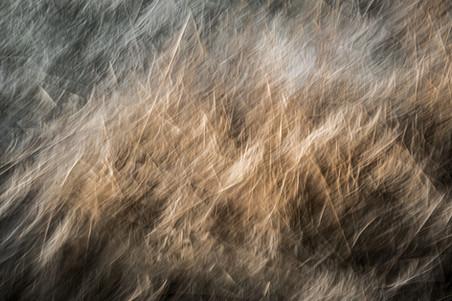 On The edge of Chaos - Meadow II