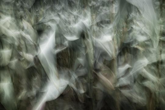 On the Edge of Chaos - Corn I