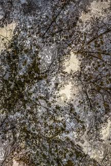 Seeking for Pollock I