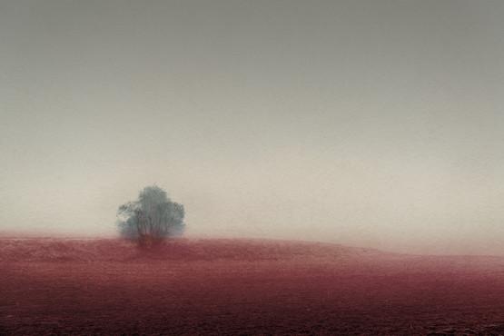 The Prodigal Tree