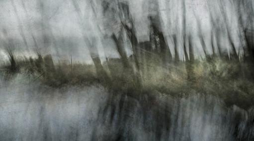 Memory of Trees I