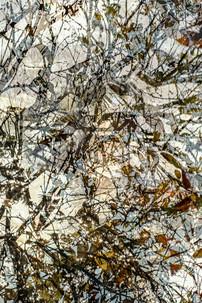 Seeking for Pollock XX
