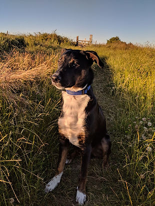 Chase (in the UK)