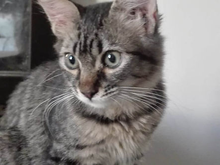 Cole (RESERVED)