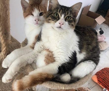 Celeste & Levi (RESERVED)