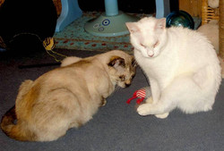 BELLA AND SOUNA