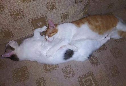 Bryony & Ronald
