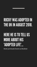 Adopted News - Rocky tells his adopted tale