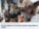 Screen Shot 2020-07-31 at 14.09.39.png