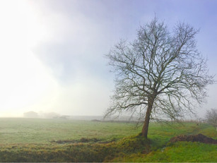 Niebla matinal