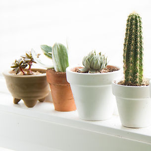 Cacti and Succulents.jpg