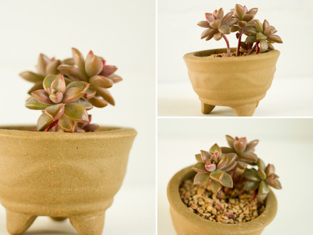 Potted Baby Succulents