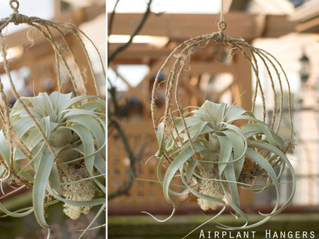 Airplant Hangers