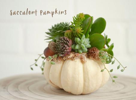 Pumpkin Succulents!