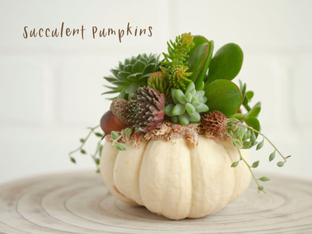 Succulent Pumpkins!