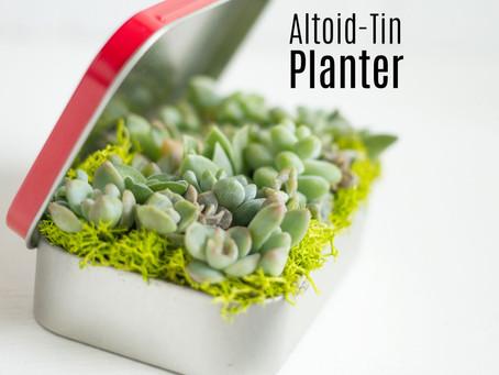 Altoid-Tin Planter!