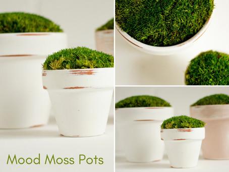 Mood Moss Pots