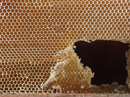 To worry about being Dead Meat or where to Buy Honey? That is the Question.