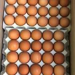 Fresh Table Eggs Sample - Eurasia Interc