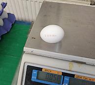 Fresh Chicken Egg - C2 Size - Eurasia In