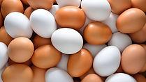 White & Brown Eggs - Eurasia Intercontin