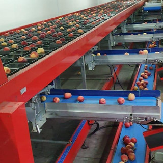 Eurasia Apples Size Sorting Machinery Uk
