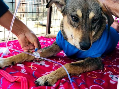 Treatment of Sick Dog