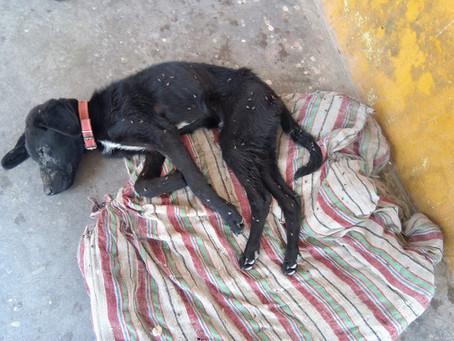 LIFE OF A STREET DOG