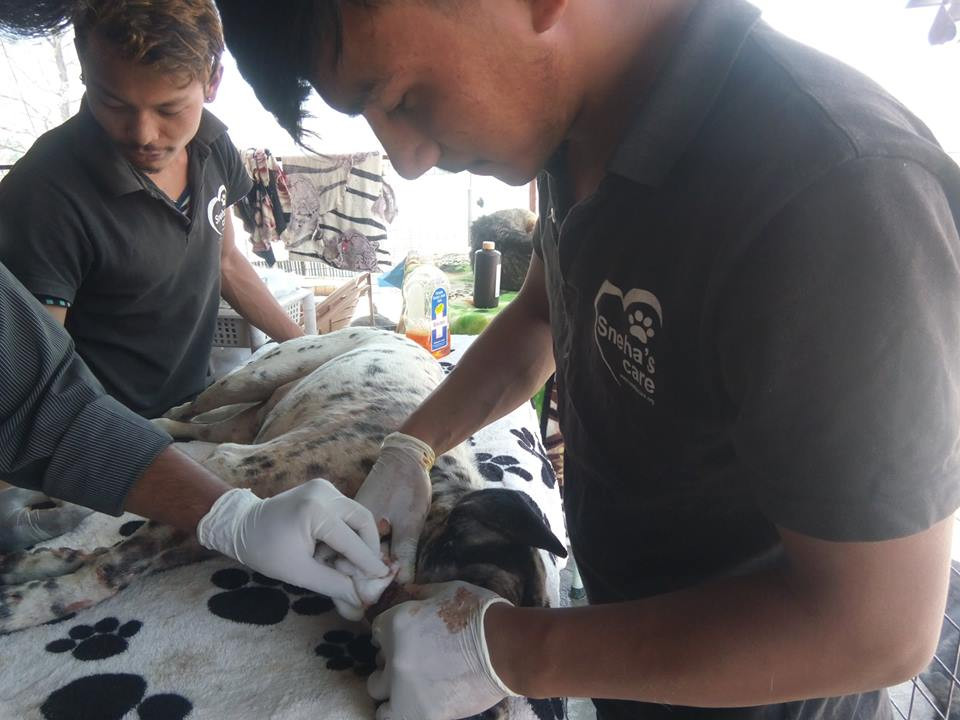 Our Vet and Technicians treating Pasa