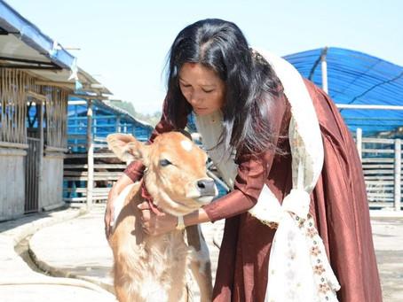 Clicks of farm animals worship day