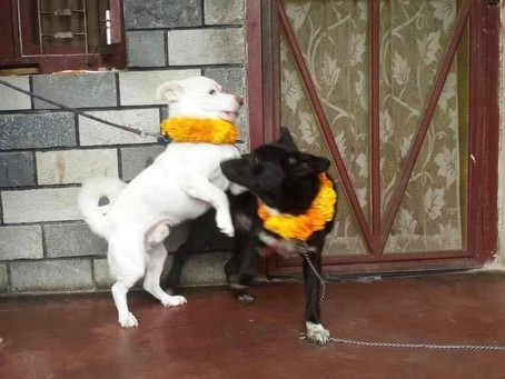 Donation in loving memory of Babu and Kalu