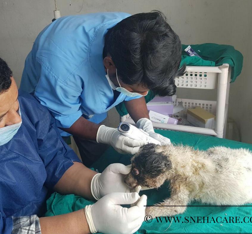 Puppy got bitten by a dog