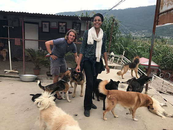 Volunteers with dogs at the Sneha's Care