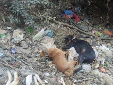 More than 20 Dead body of breed dogs found