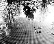 reflejos-1.jpg