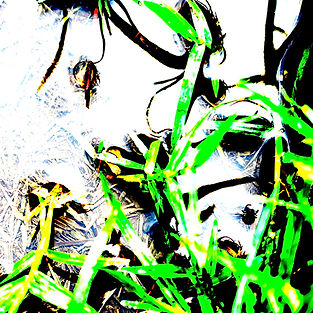 agua-ecoart4.jpg