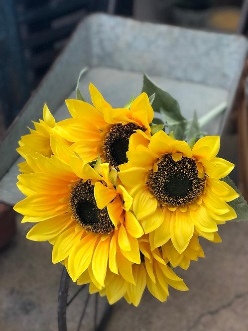 Sunflowers - bunch