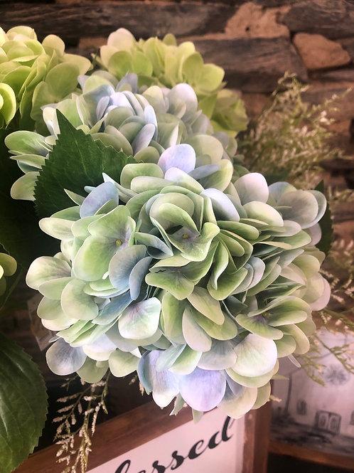 Blue & Green Hydrangea