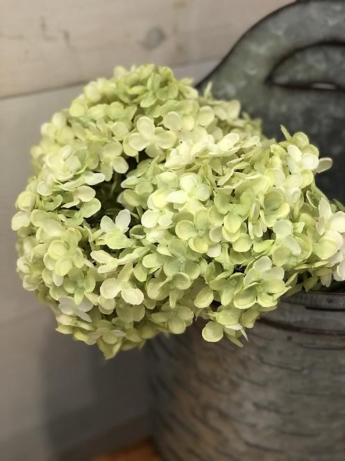 Green stem
