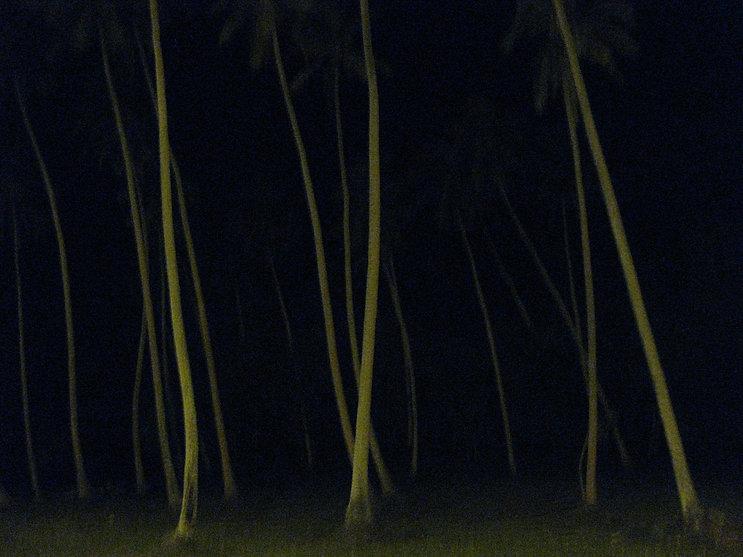 night walk_toprint.jpg