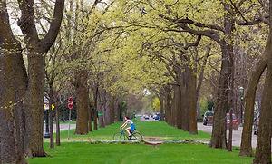 bikingtrees.jpg