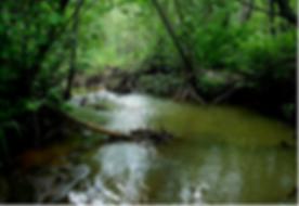 fish creek at la honda .tiff