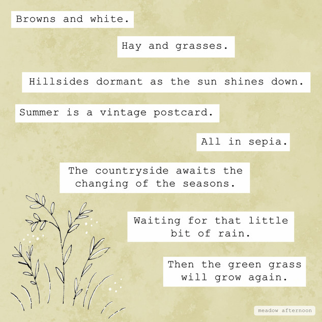 Summer - Mini Paragraph - Meadow Afternoon