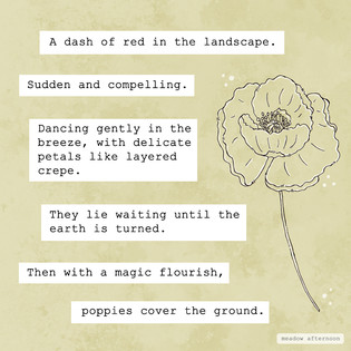 Poppies - Mini Paragraph - Meadow Afternoon