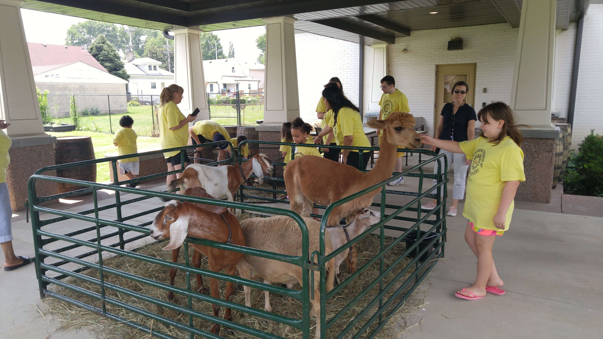 Super cool animals at the petting zoo