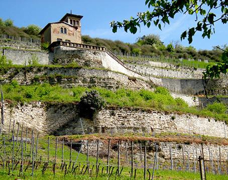 Surprising Germany #3 - Wine