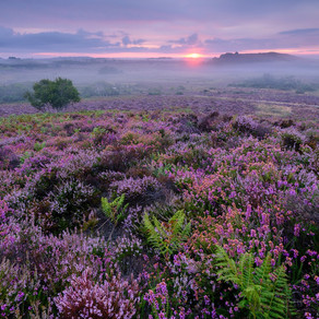 The Purbeck Heathlands